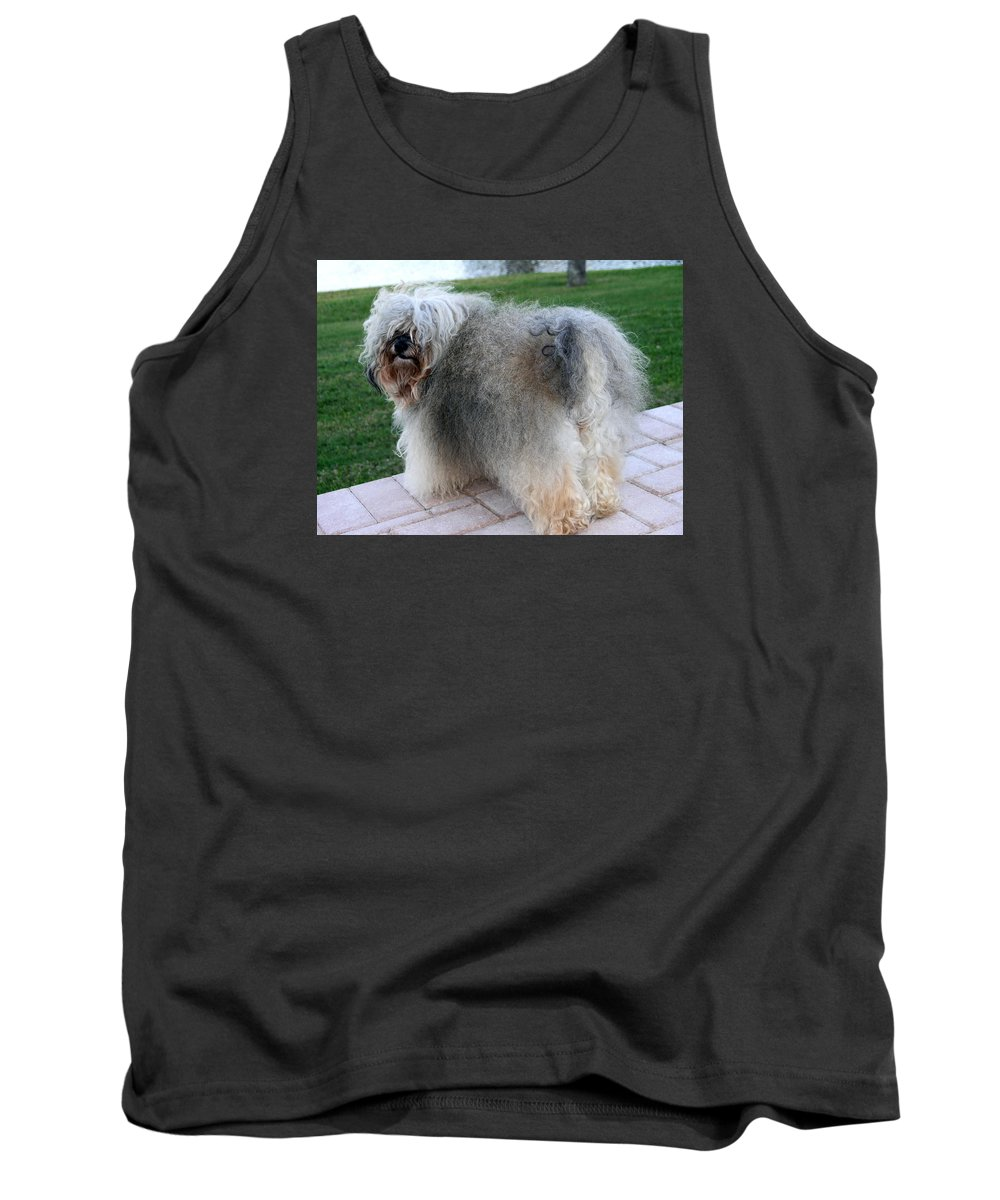 Havanese Dog Tank Top featuring the photograph ball of fur Havanese dog by Sally Weigand