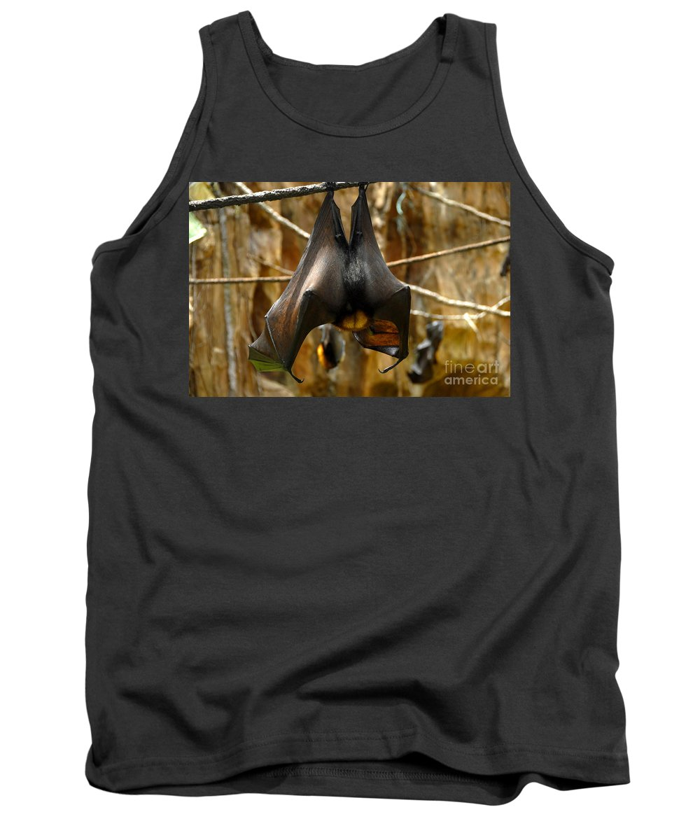 Bats Tank Top featuring the photograph Bats by David Lee Thompson