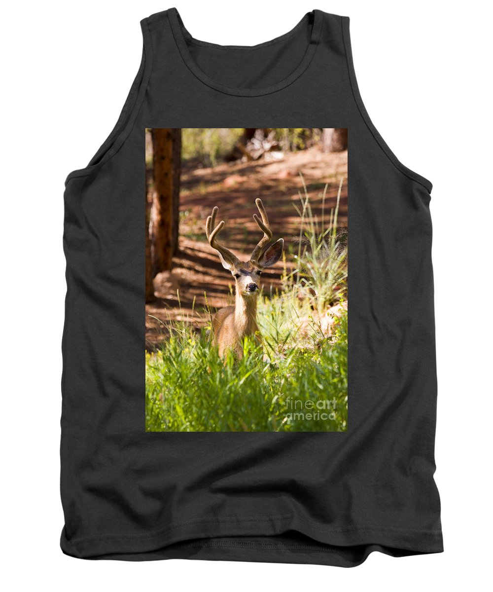 Deer Tank Top featuring the photograph Beautiful Buck Deer In The Pike National Forest by Steve Krull