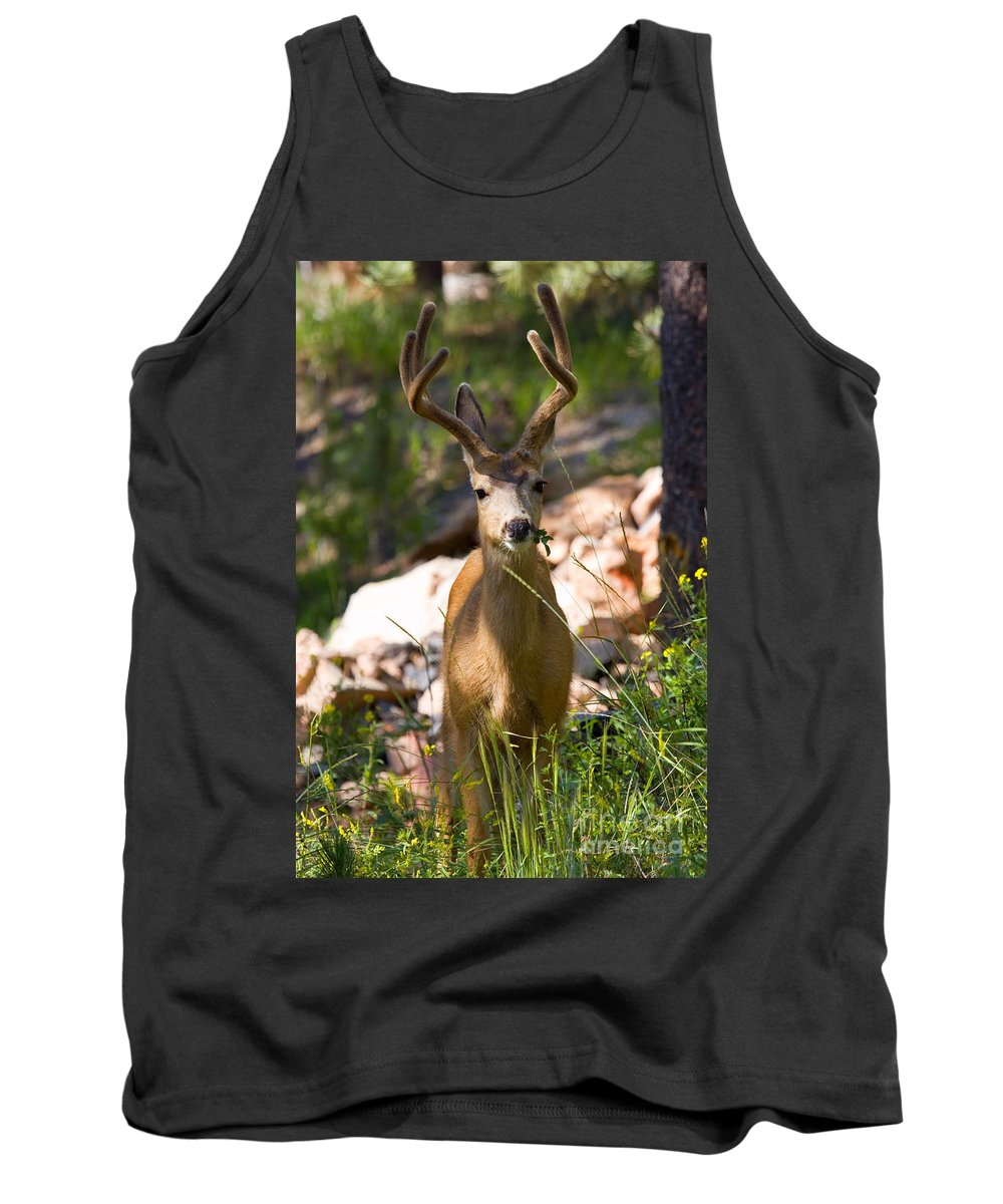 Mule Deer Tank Top featuring the photograph Beautiful Buck In The Pike National Forest by Steve Krull