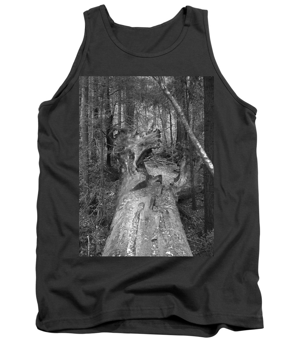 Landscape Tank Top featuring the photograph Big Basin 2 by Karen W Meyer