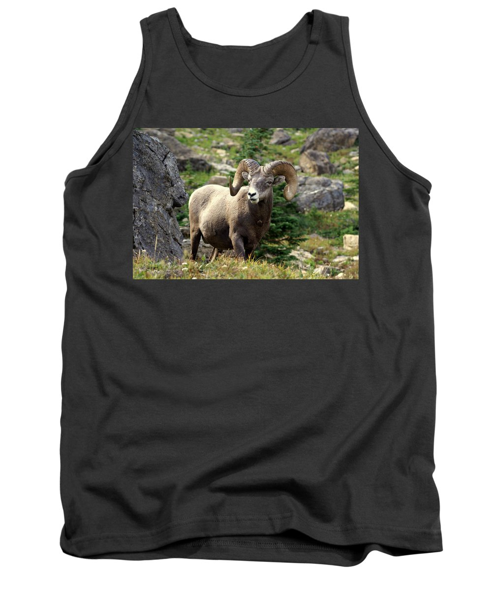 Big Horn Sheep Tank Top featuring the photograph Bighorn 1 by Marty Koch