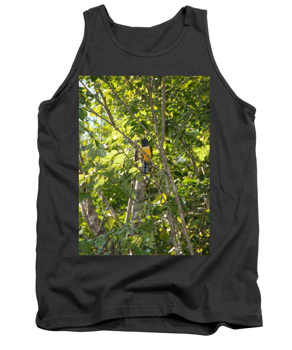 Mexico Quintana Roo Tank Top featuring the digital art Birds Inside The Coba Ruins by Carol Ailles