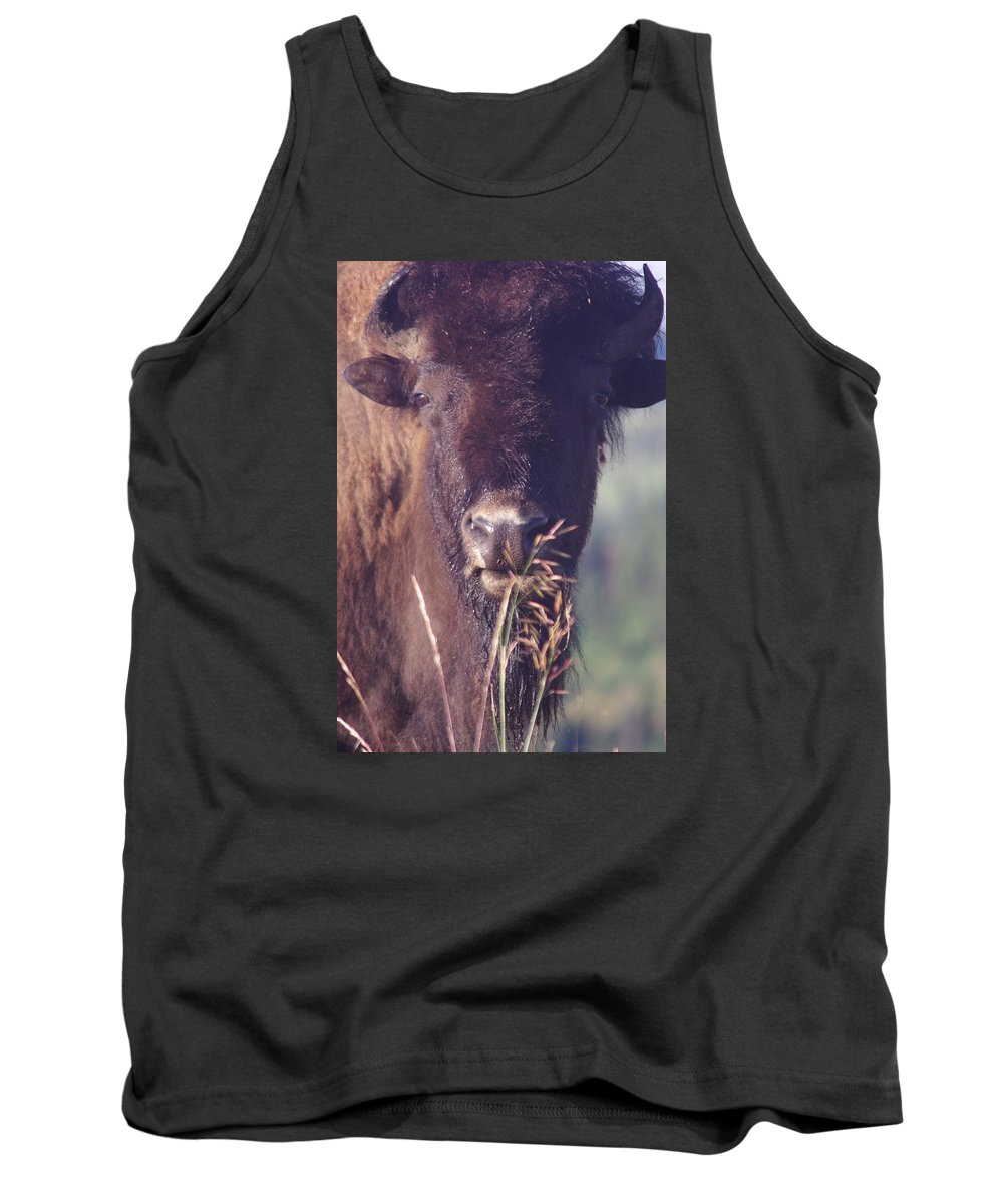 Photography Tank Top featuring the photograph Bison Gaze by Michelle Fairchild
