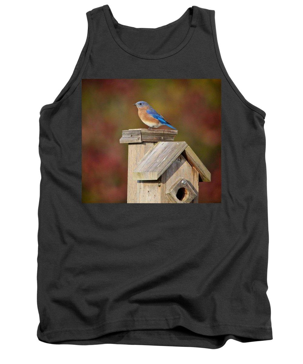 Bird Tank Top featuring the photograph Blue Bird by Robert Pearson
