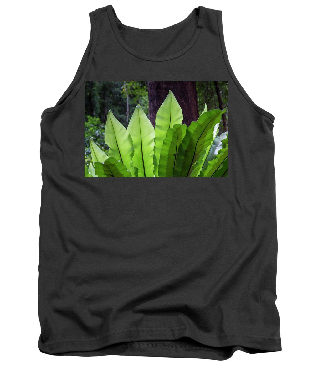 Australia Tank Top featuring the photograph Bold Fronds 11 by Stuart Mackenzie