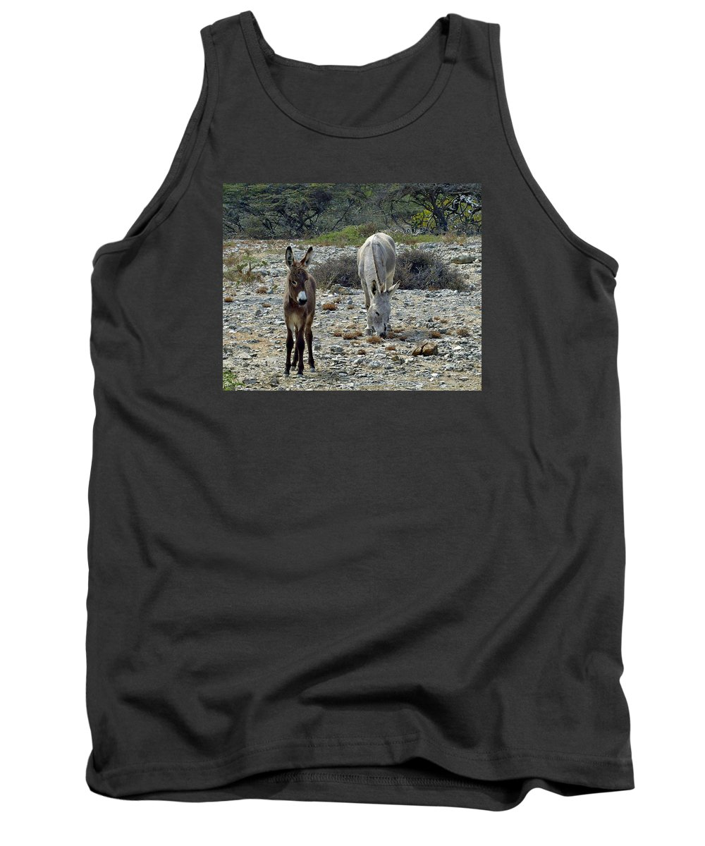 Bonaire Tank Top featuring the photograph Bonaire Wild Donkeys 2 by June Goggins