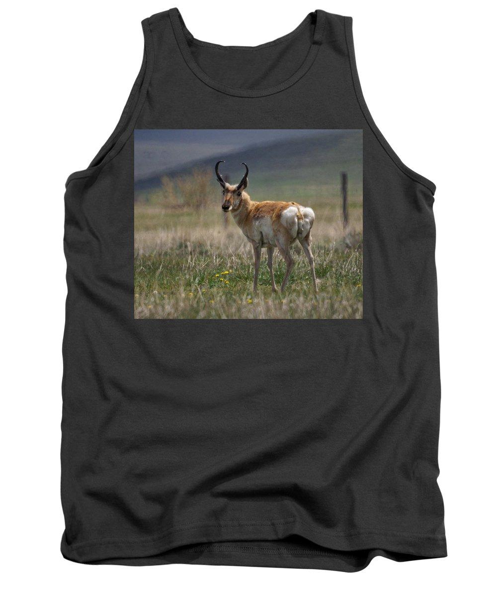 Buck Tank Top featuring the photograph Buck Antelope by Heather Coen