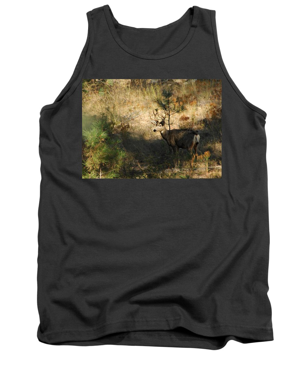 Deer Tank Top featuring the photograph Buck by Donna Blackhall
