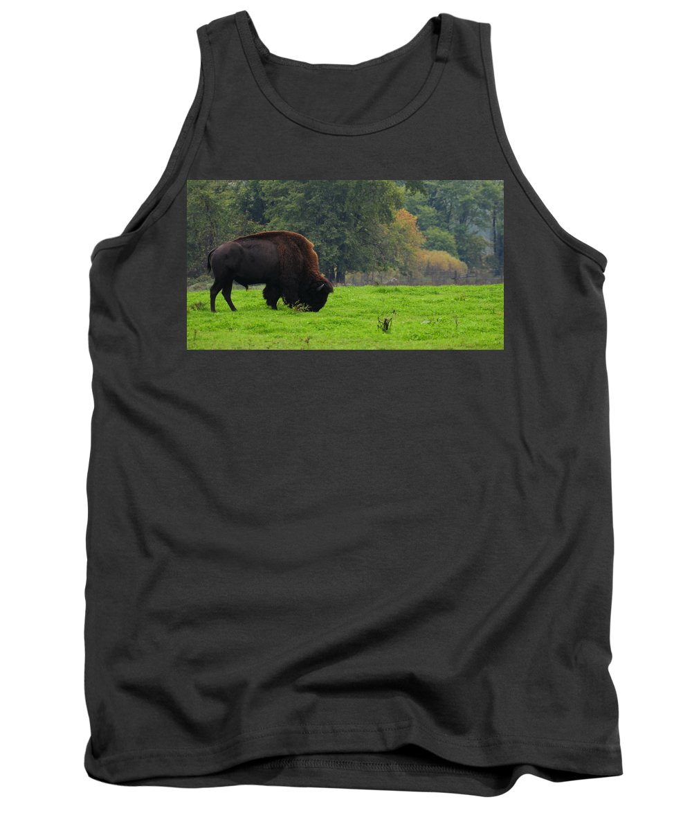 Buffalo Tank Top featuring the photograph Buffalo In Spring Grass by David Arment