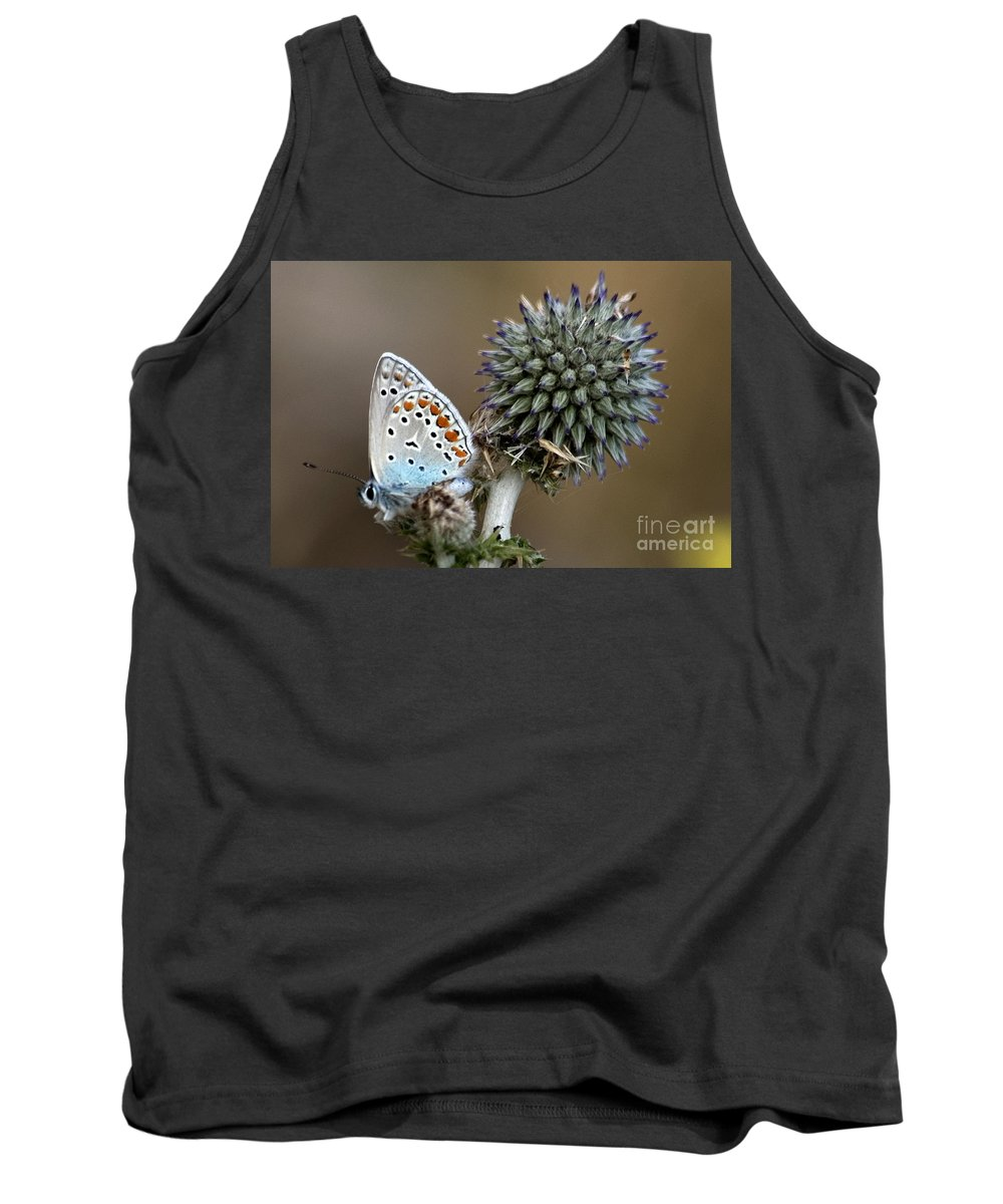 Butterfly Tank Top featuring the photograph butterfly on a Echinops adenocaulon by Nahum Budin