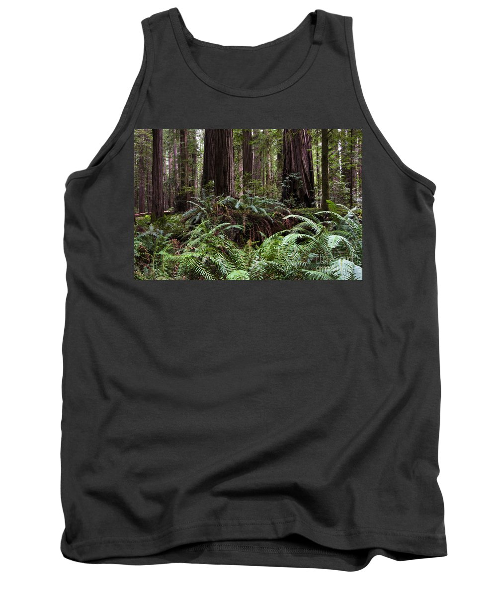 Redwood Tank Top featuring the photograph California Redwoods 2 by Bob Christopher