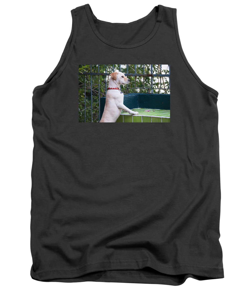 Dog Tank Top featuring the photograph Canica 4 by David Resnikoff