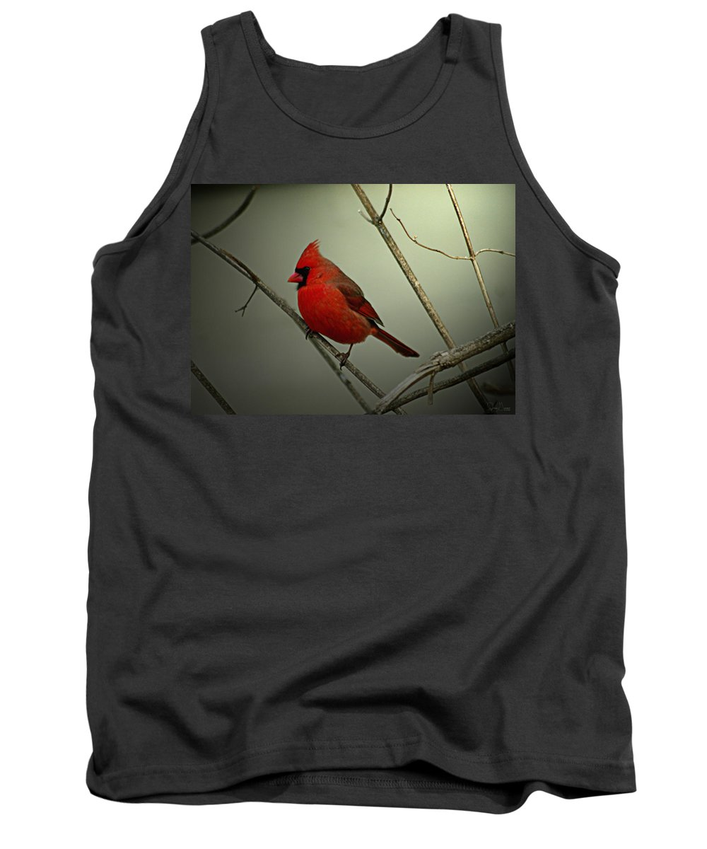 Jenny Gandert Tank Top featuring the photograph Cardinal And The Setting Sun by Jenny Gandert