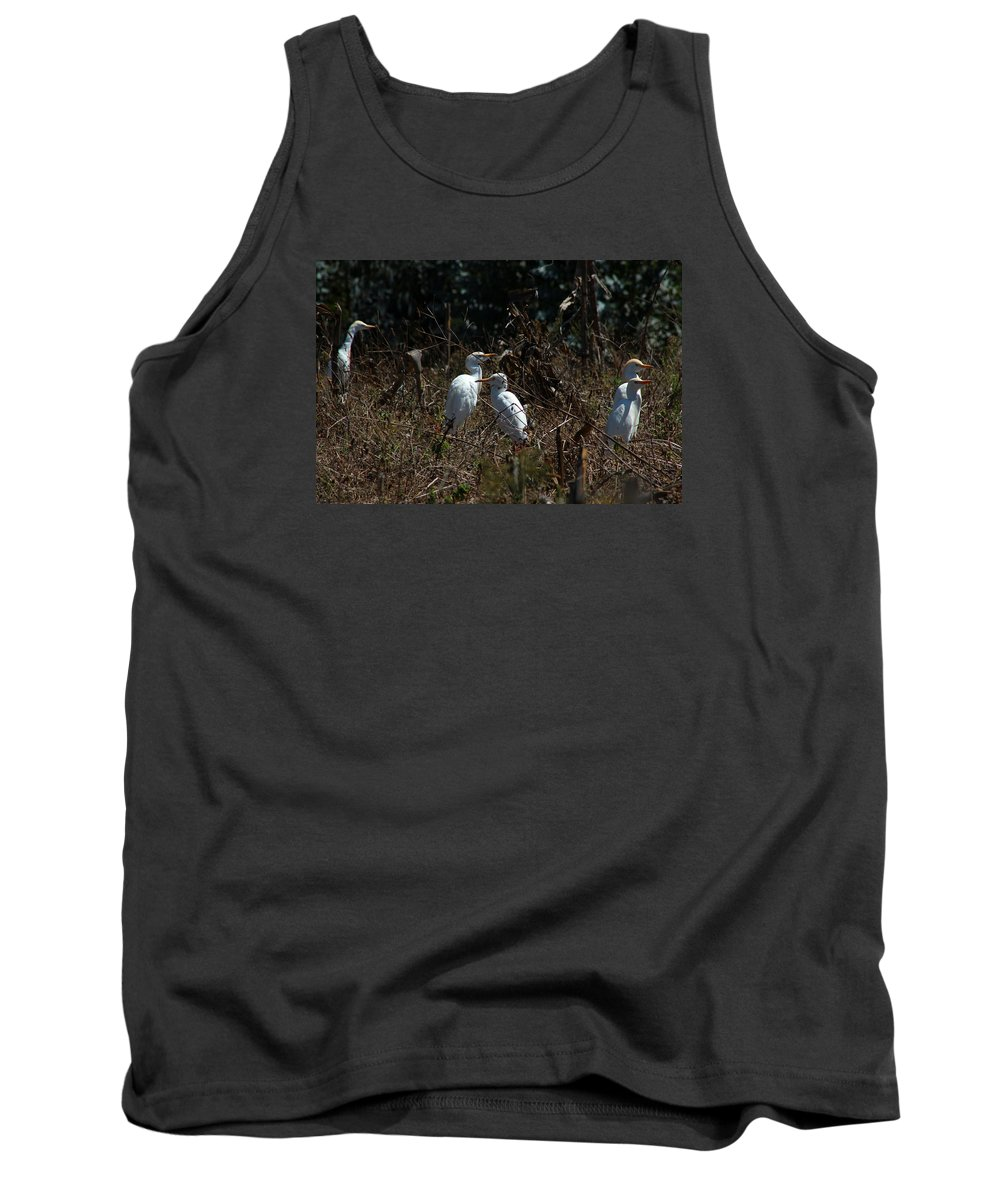 Cattle Egret Tank Top featuring the photograph Cattle Egrets In A Pasture by Robert Hamm