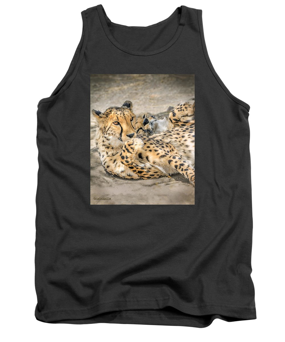 Lounge Cat Tank Top featuring the photograph Cheetah Lounge Cats by LeeAnn McLaneGoetz McLaneGoetzStudioLLCcom