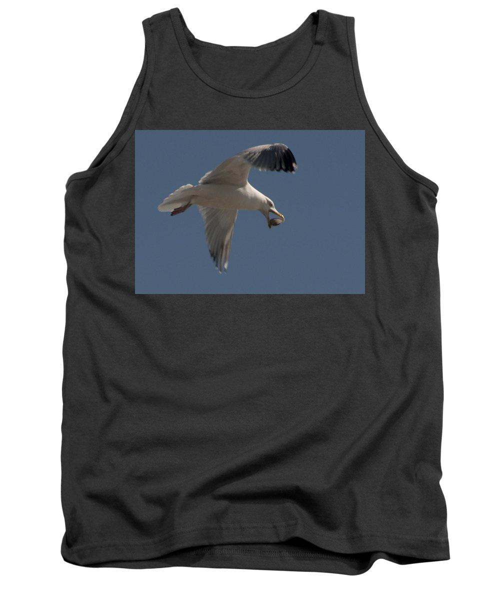 Seagull Tank Top featuring the photograph Clams For Dinner by Steven Natanson