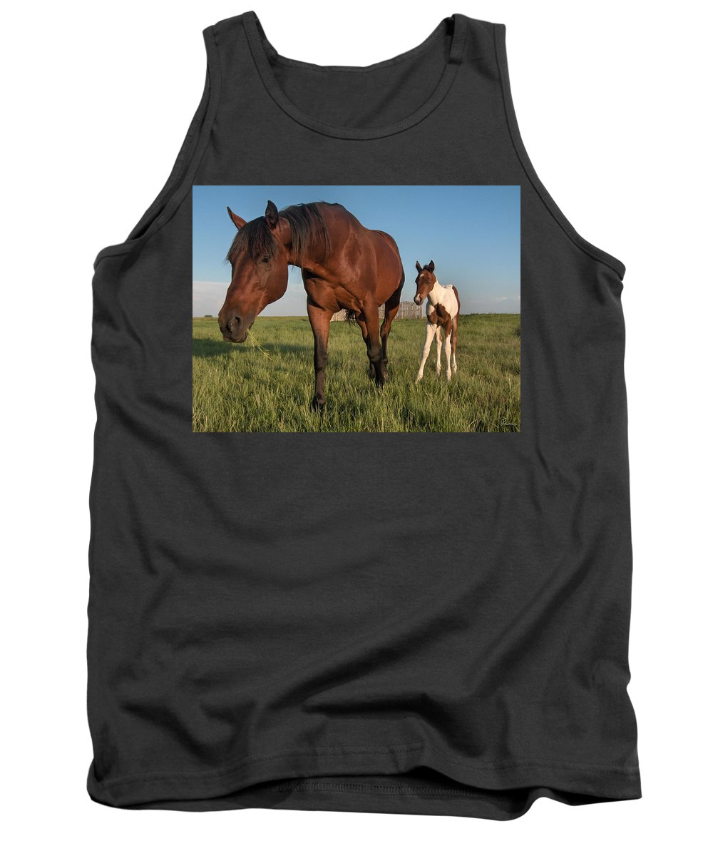Horse Colt Baby Animals Herd Filly Ranch Farm Life Pasture Tank Top featuring the photograph Contentment by Andrea Lawrence
