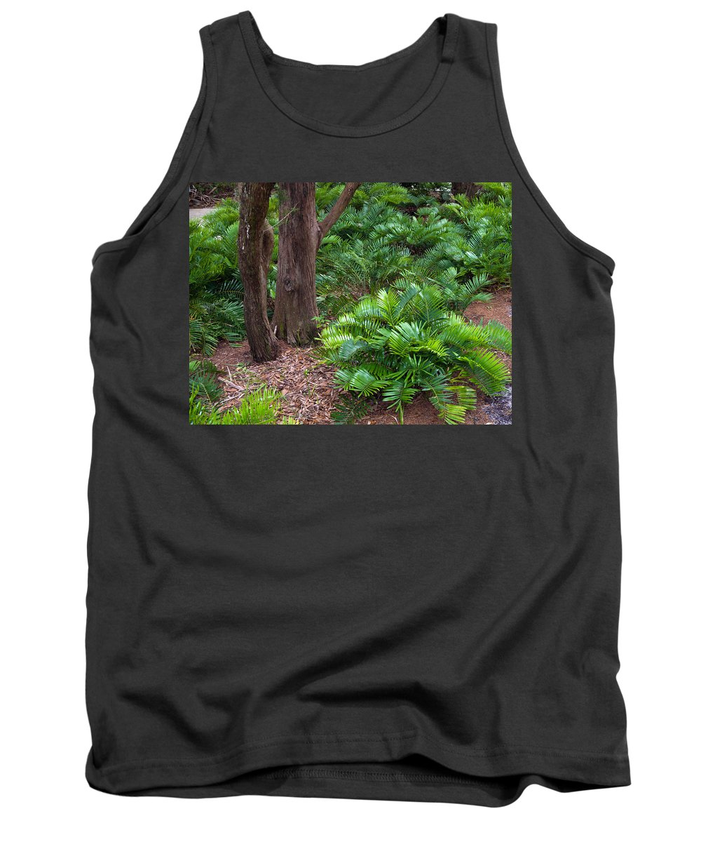Florida; Coontie; Zamia; Integrifolia; Arrowroot; Indian; Bread; Breadroot; Plant; Rare; Wild; Prote Tank Top featuring the photograph Coontie Florida Arrowroot Or Indian Breadroot by Allan Hughes