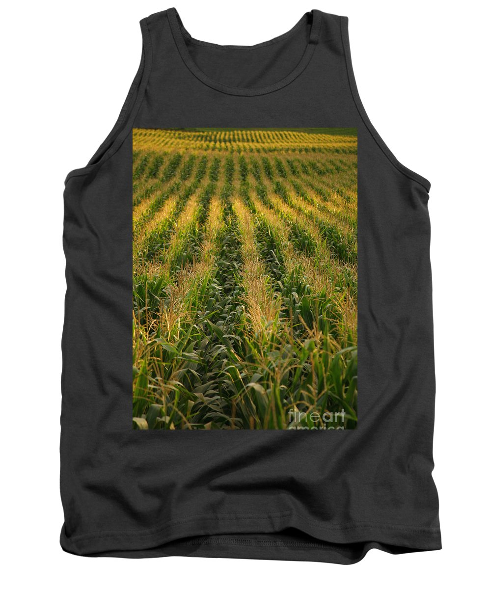 Acores Tank Top featuring the photograph Corn Field by Gaspar Avila