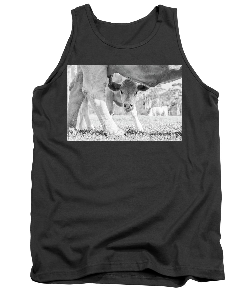 Cow Tank Top featuring the photograph Cow Milk by Jodie Nash