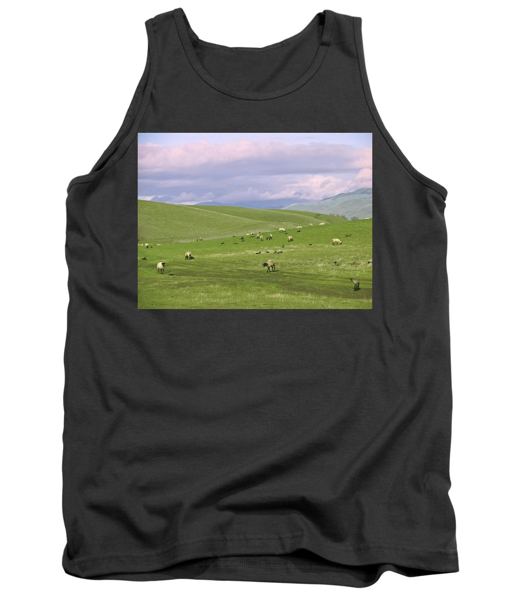 Landscape Tank Top featuring the photograph Cross Road Sheep by Karen W Meyer