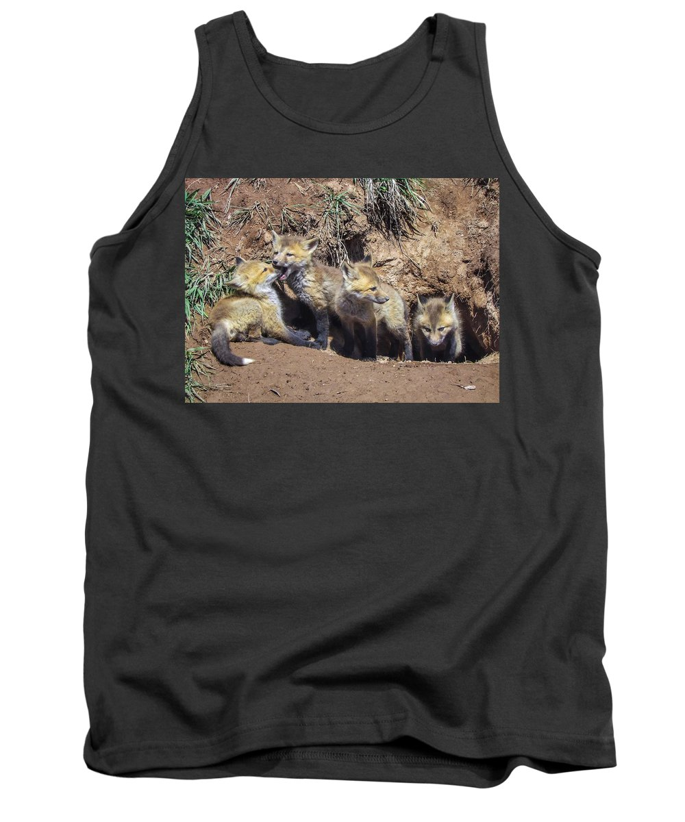 Red Fox Tank Top featuring the photograph Curiosity Wins by LeAnne Perry