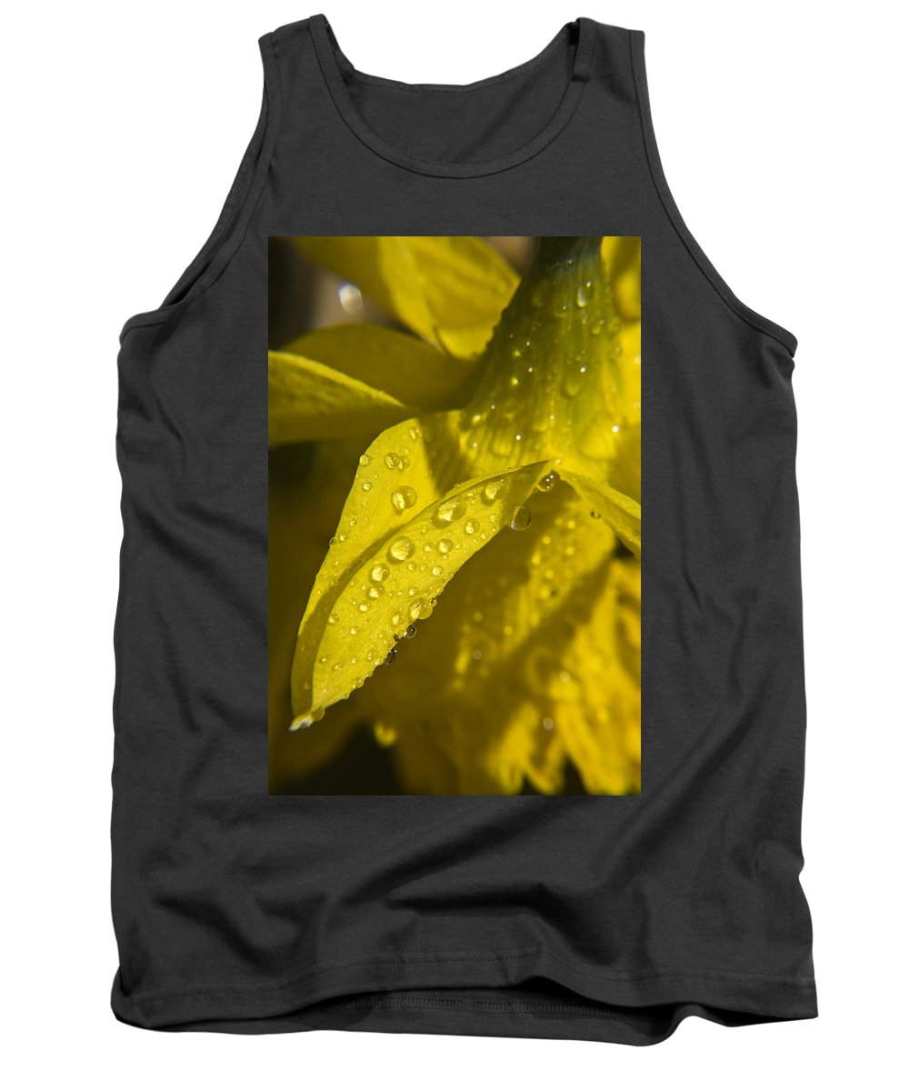 Daffodil Tank Top featuring the photograph Daffodil Dew by Teresa Mucha