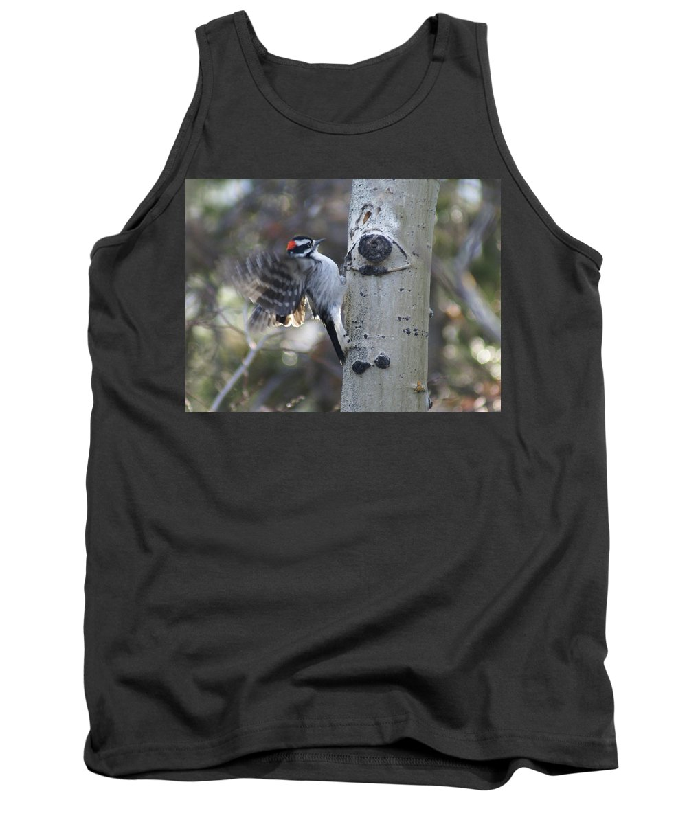 Woodpecker Tank Top featuring the photograph Downy Woodpecker by Heather Coen