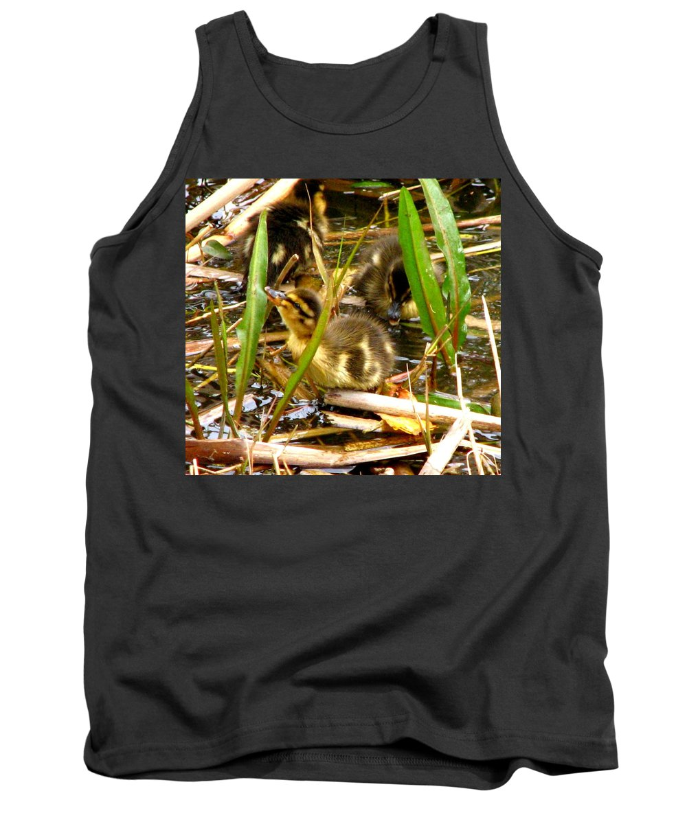 Duck Tank Top featuring the photograph Ducklings 1 by J M Farris Photography