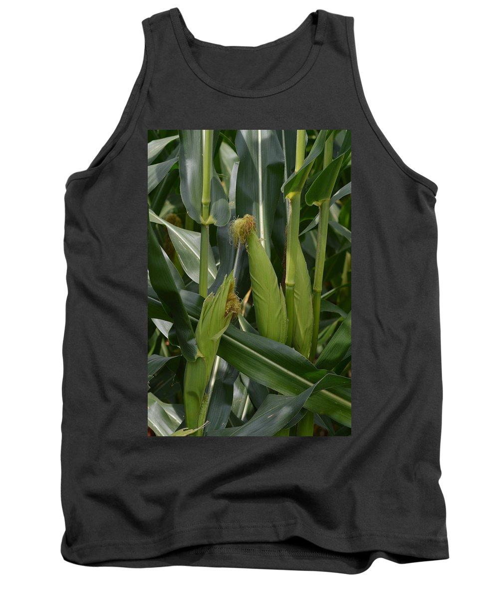 Corn Tank Top featuring the photograph Ears Of Corn by Belinda Stucki