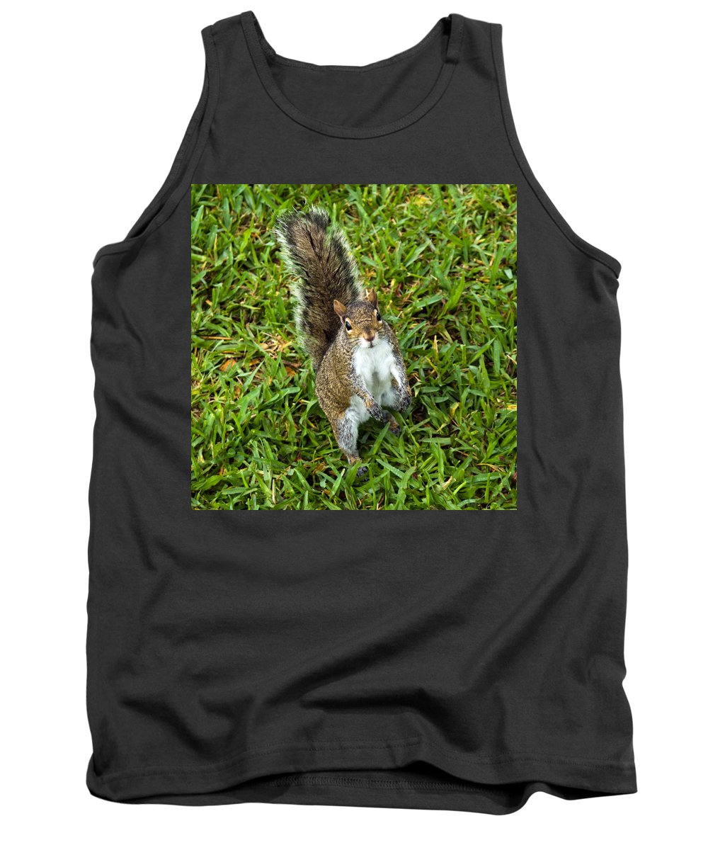 Squirrel; Eastern; Gray; Sciurus; Carolinensis; Swarm; Food; Florida; Eau; Gallie; Melbourne; Park; Tank Top featuring the photograph Eastern Gray Squirrel by Allan Hughes