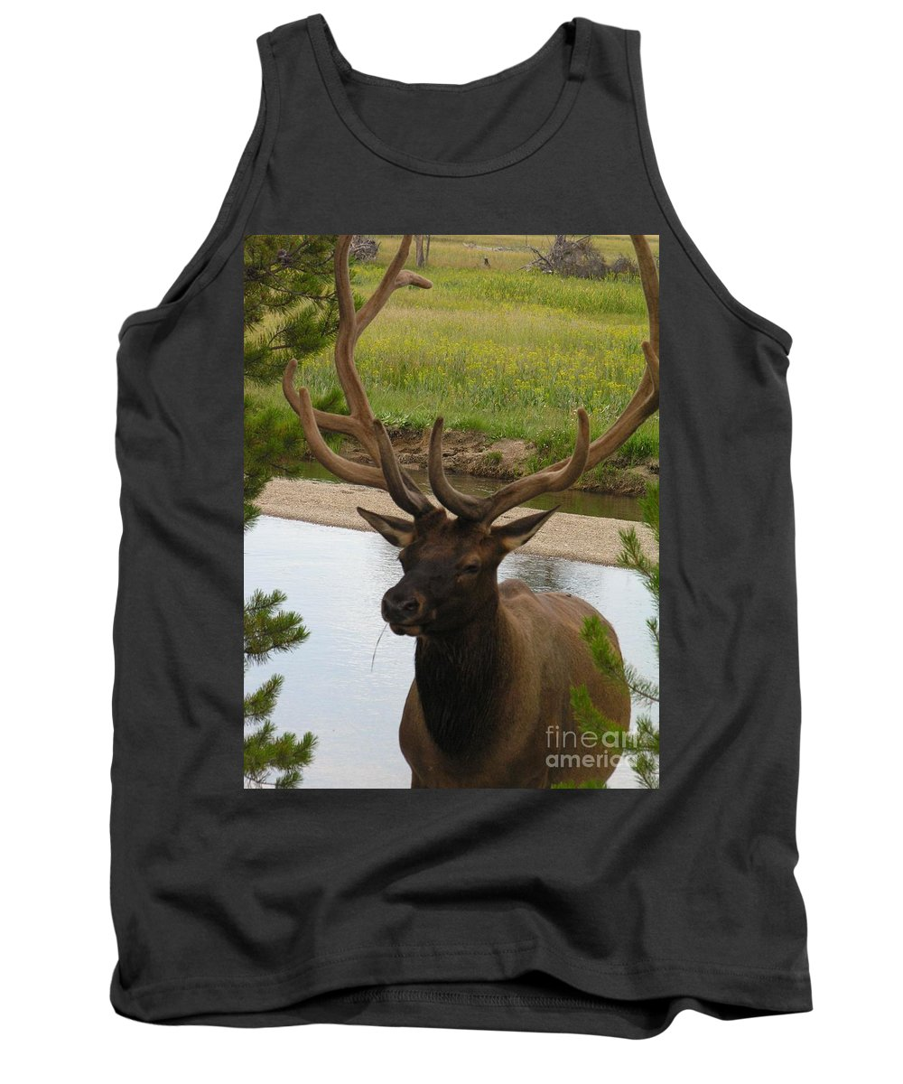 Elf Tank Top featuring the photograph Elk by Diane Greco-Lesser