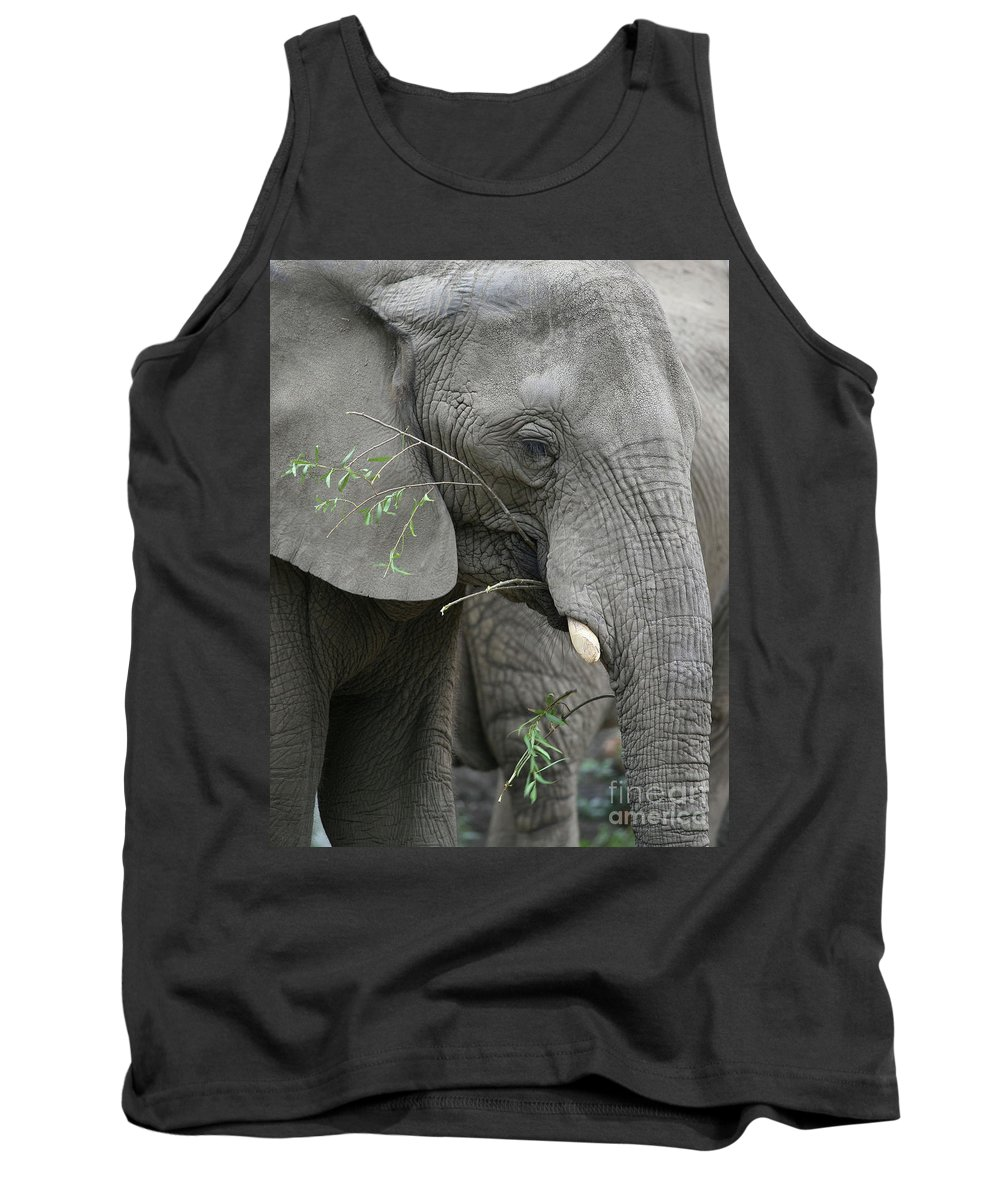 Elephant Tank Top featuring the photograph Elly At Lunch by Karol Livote