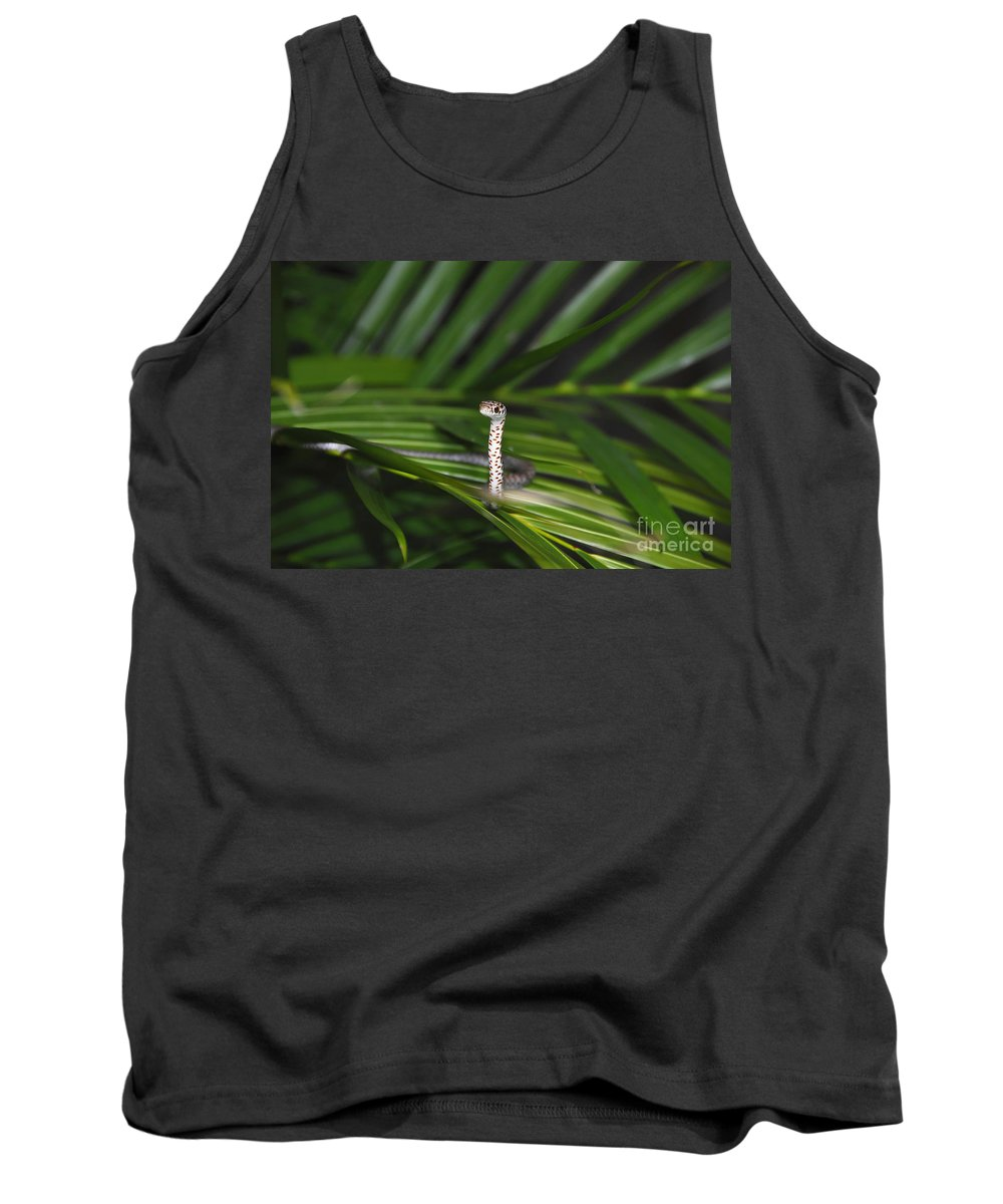 Everglades Racer Tank Top featuring the photograph Everglades Racer by David Lee Thompson