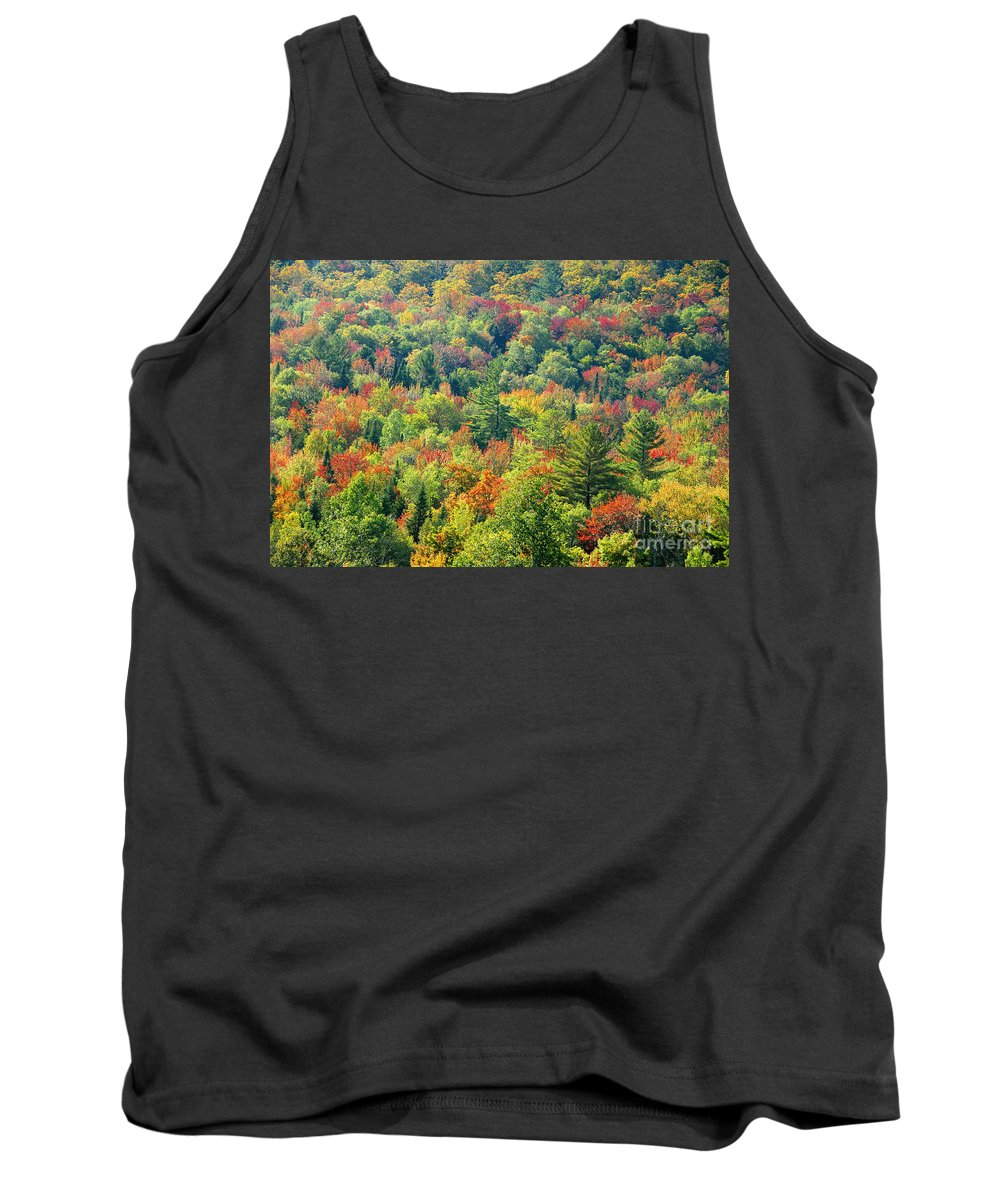 Adirondack Mountains Tank Top featuring the photograph Fall Forest by David Lee Thompson