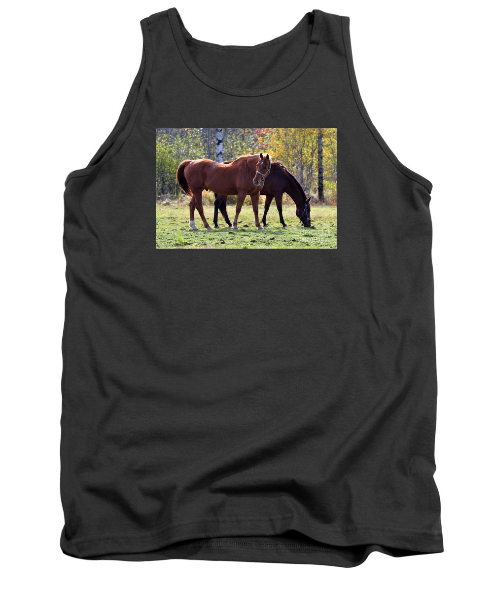 Horse Tank Top featuring the photograph Horses Fall Grazing by Glenn Gordon