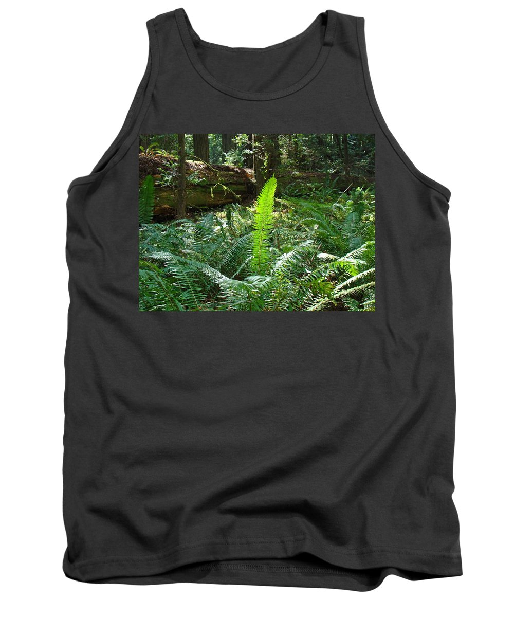 Fern Tank Top featuring the photograph Ferns Sunlit Redwood Forest Fern Giclee Art Prints Baslee Troutman by Baslee Troutman