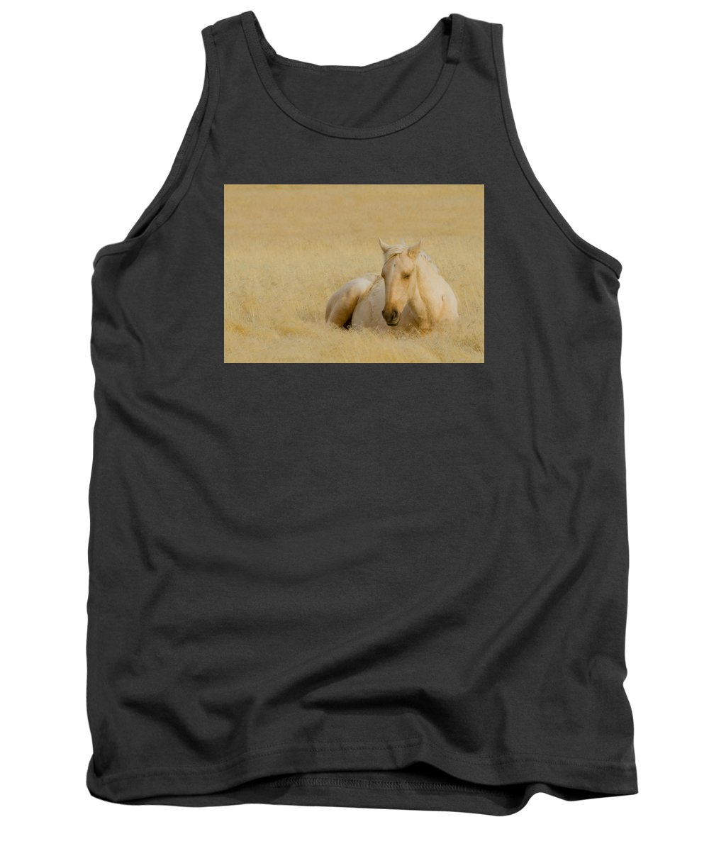 Wild Horse Tank Top featuring the photograph Fields Of Gold by Kent Keller
