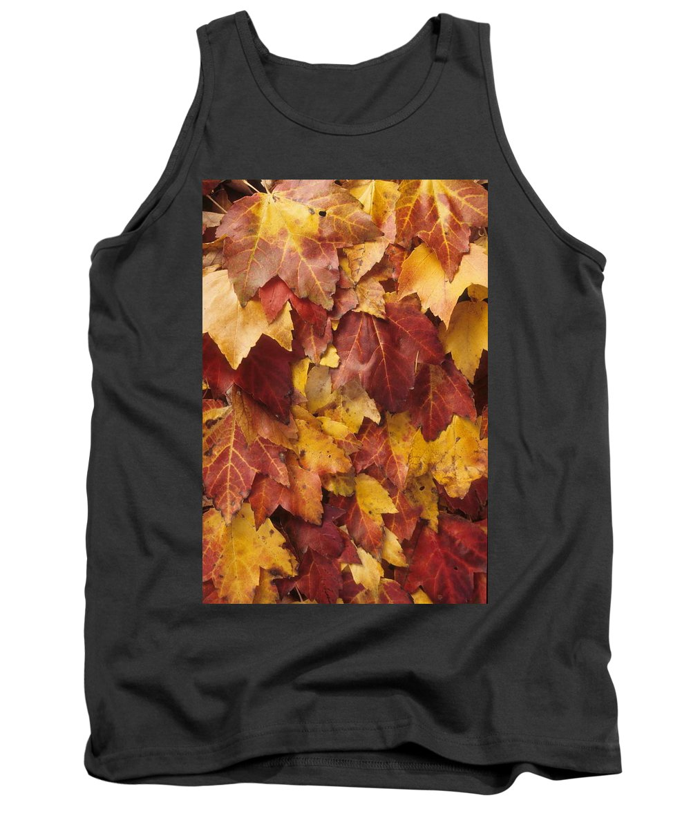 Fall Tank Top featuring the photograph Final Fall In File by Laurie Paci