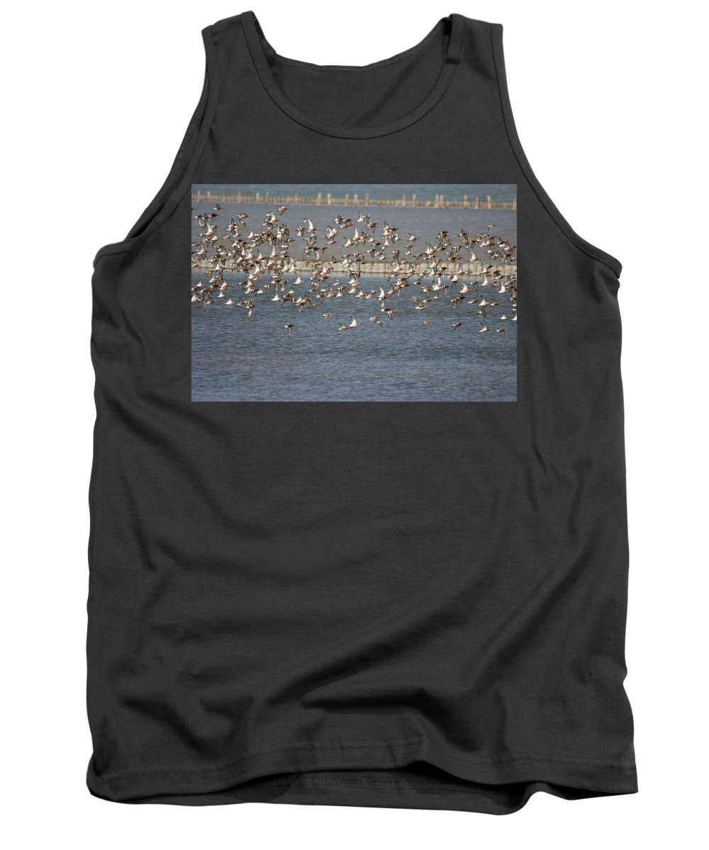River Life Tank Top featuring the photograph Flock Of Birds In Flight by Cliff Norton