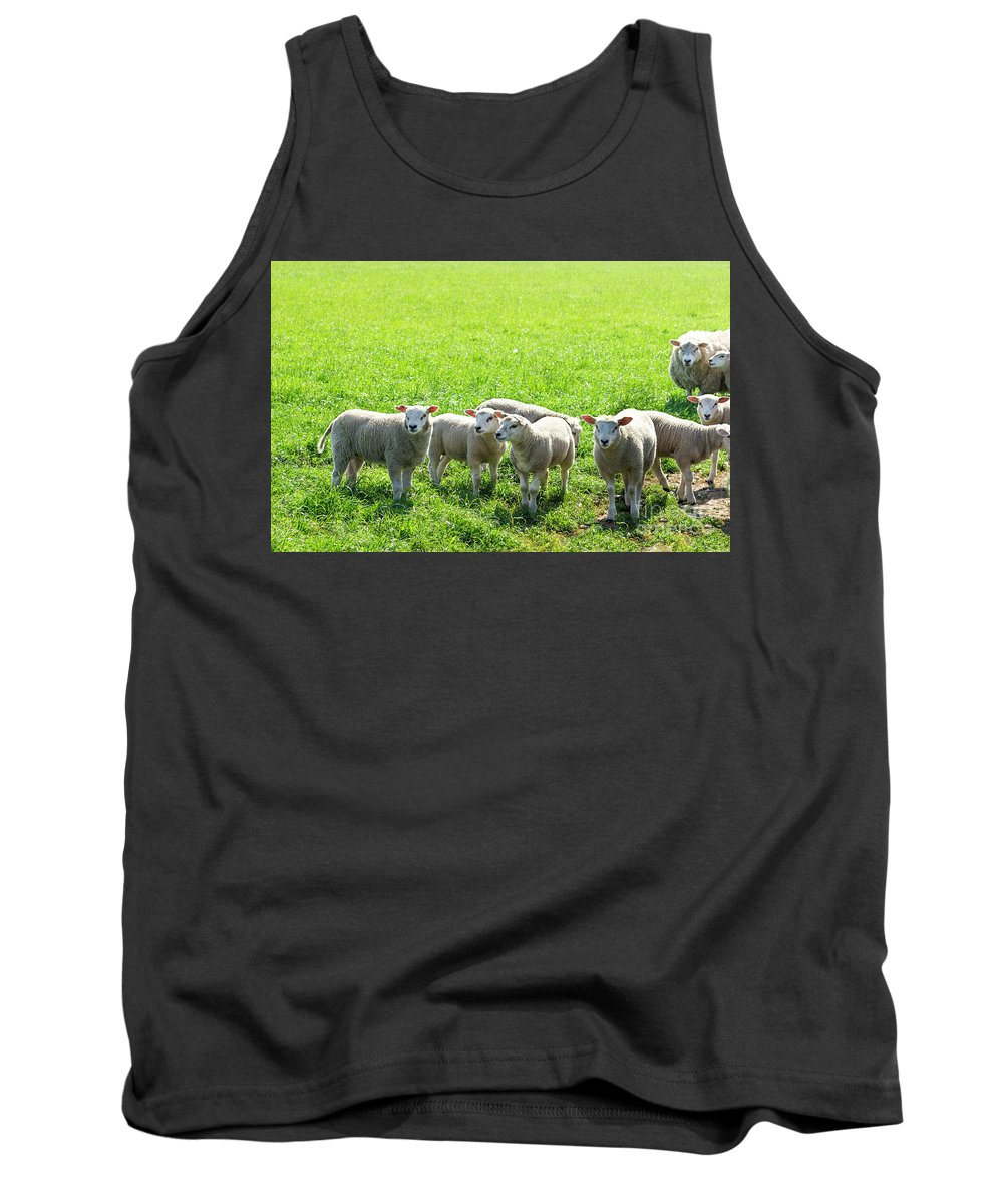 Agricultural Tank Top featuring the photograph Flock Of Sheep Standing In A Field Waiting by Tetyana Ustenko