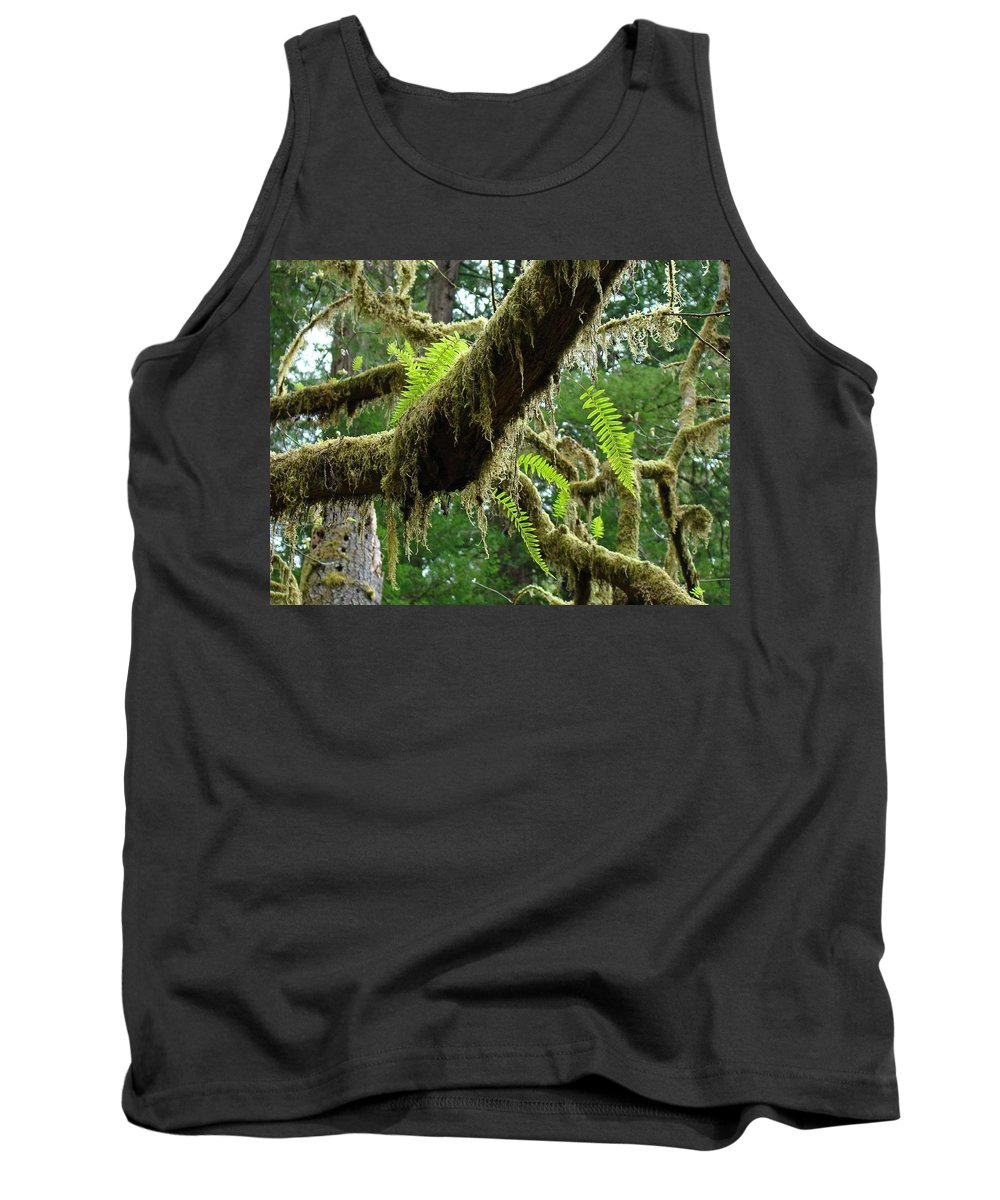 Fern Tank Top featuring the photograph Forest Ferns Art Prints Fern Giclee Prints Baslee Troutman by Baslee Troutman