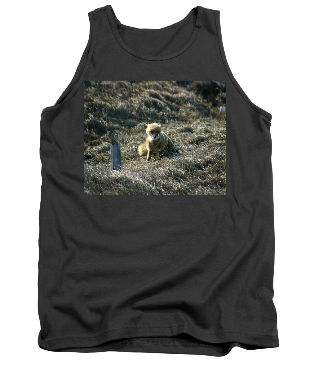 Red Fox Tank Top featuring the photograph Fox In The Wind by Anthony Jones