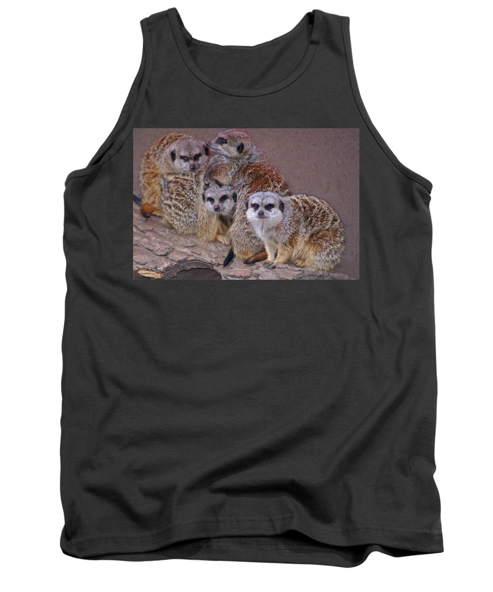 Mer Cats Tank Top featuring the photograph Freezing Meer Cats by Heather Coen