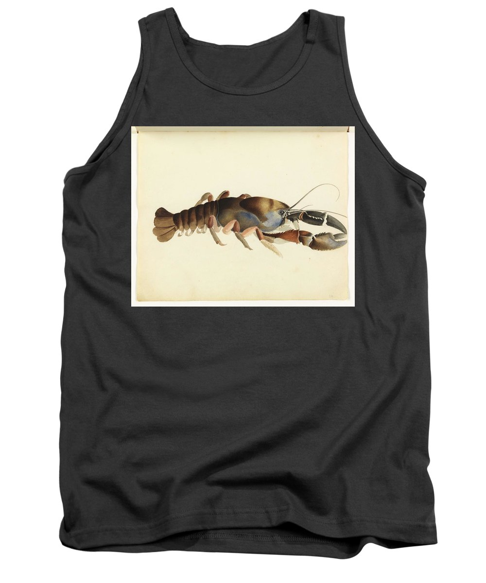Art Tank Top featuring the painting Fresh Water Crayfish Unsigned Sketches Attributed To William Buelow Gould by William Buelow Gould