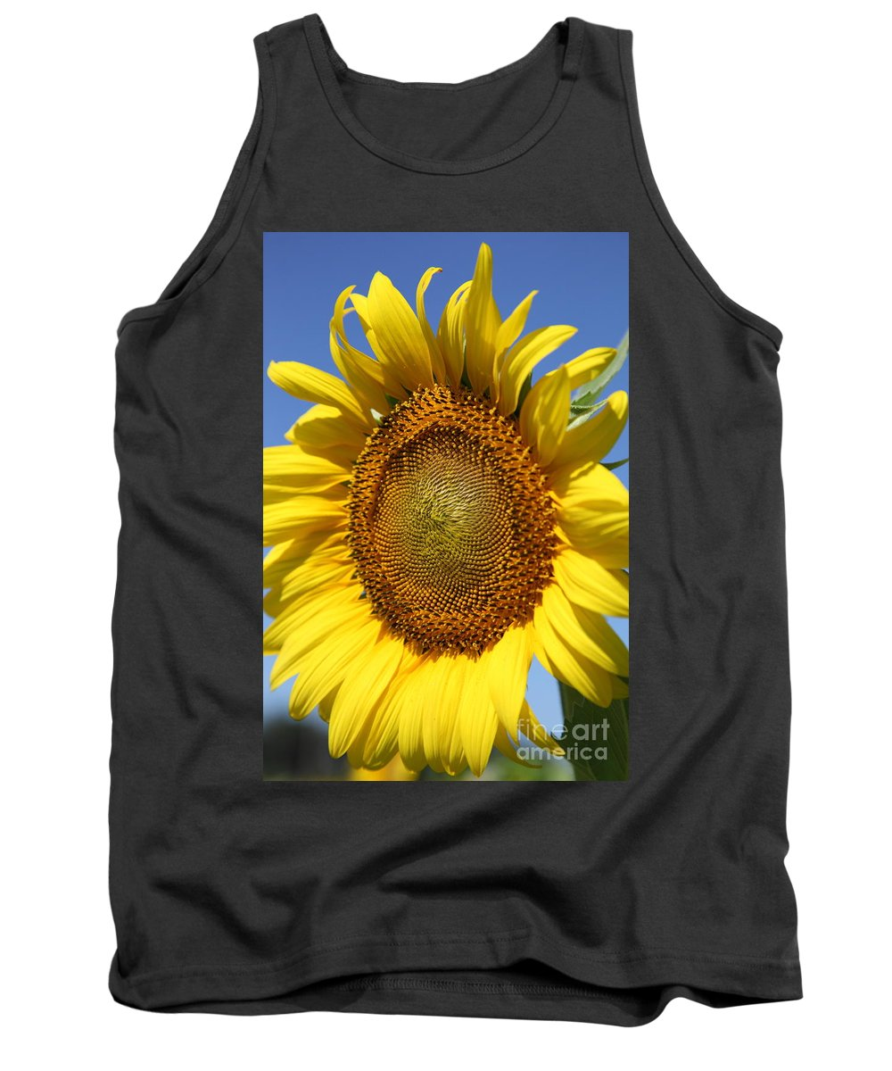 Sunflowers Tank Top featuring the photograph Full by Amanda Barcon