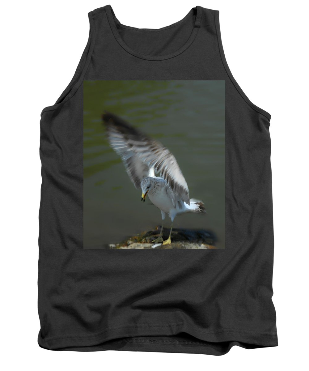 Seagull Tank Top featuring the photograph Gabriel The Gull by Donna Blackhall