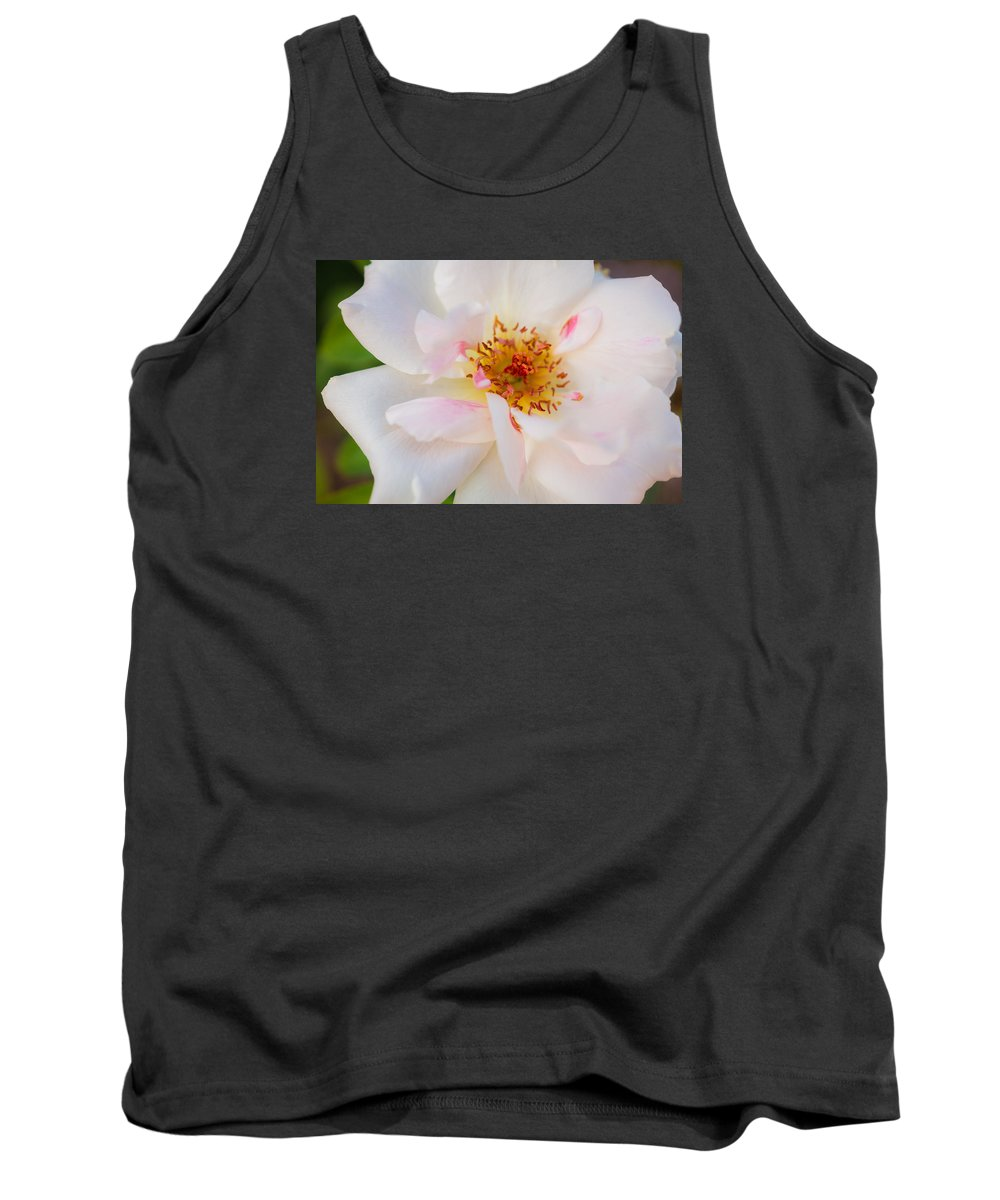 Garden Rose Tank Top featuring the photograph Garden Rose Blush by Cody Fountain