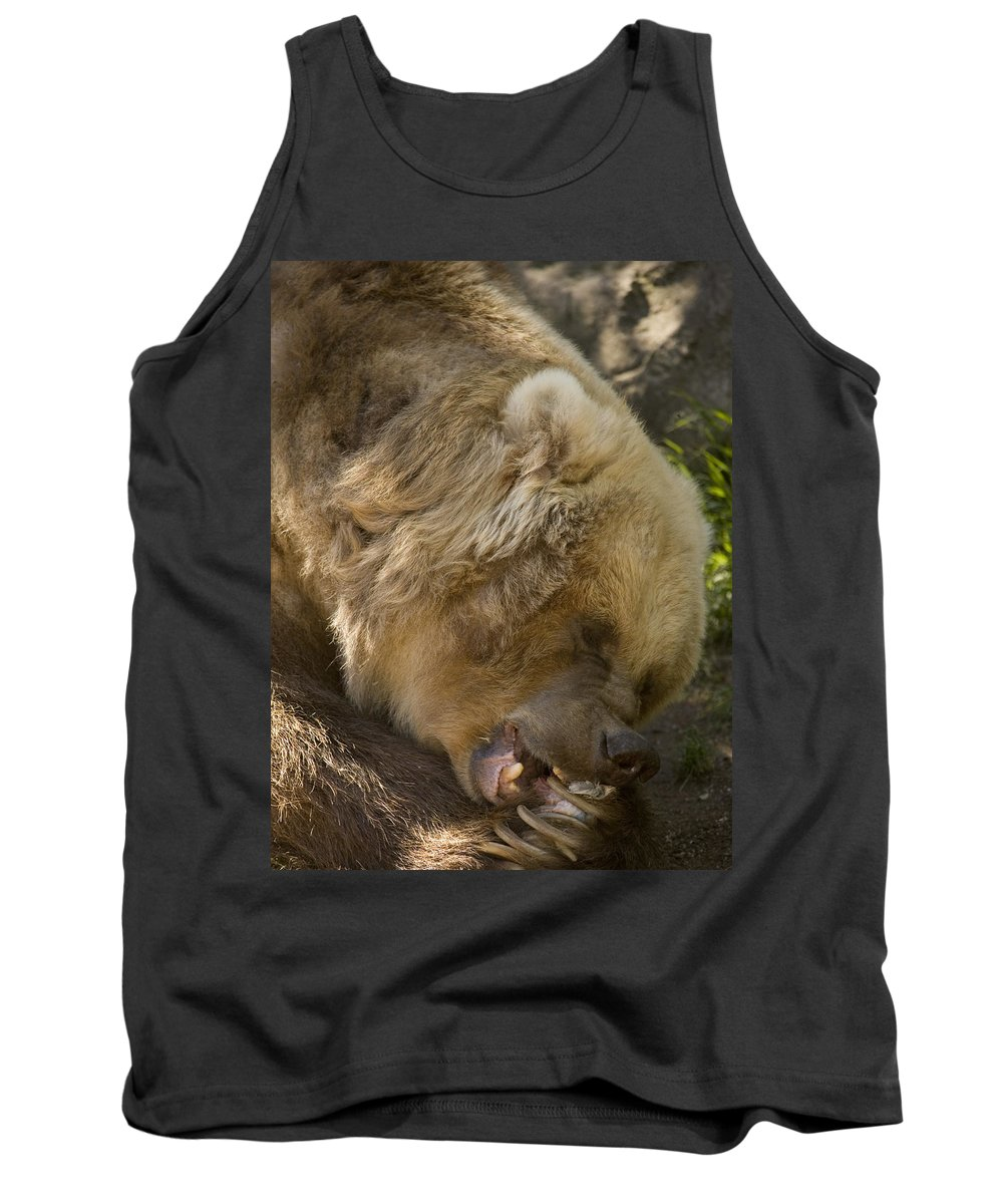 Bear Tank Top featuring the photograph Gnaw by Mike Dawson